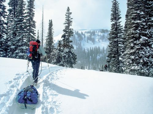 Students backcountry ski with gear sleds by tall snow laden trees while it snows in the Idaho backcountry.