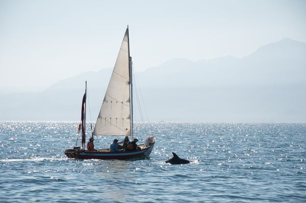 Several students on a sailboat in Baja next to a dolphin with misty mountains in background.